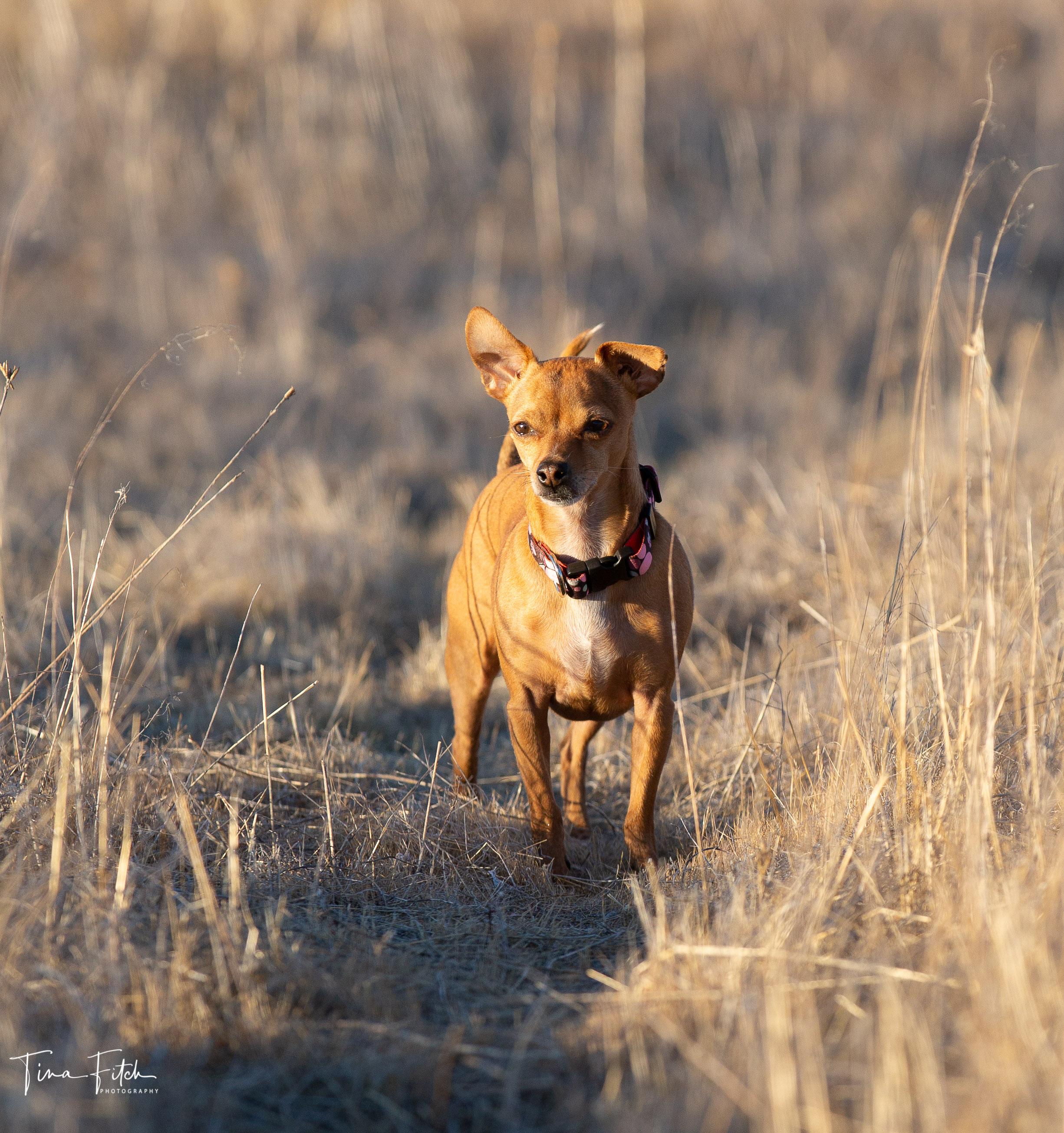 Cuyamaca Dog (9 of 11)